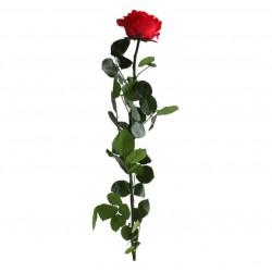 Rose Premium Stabilisée Rouge / 1 Pièce